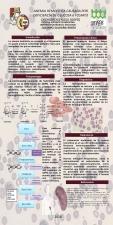 04 Anemia Hemolítica DG6FD